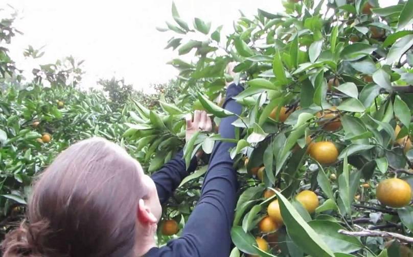 Pilih Sendiri Buah di Kebun